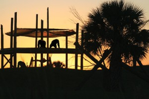 Chimps-in-Sunset-Front