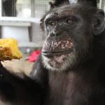 Frieda with pineapple Sept 2012