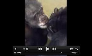 IndieTerryVideoScreenShot300