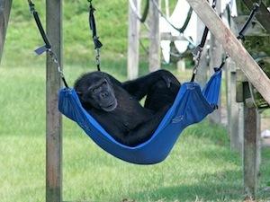 Lil' Mini in hammock(1)