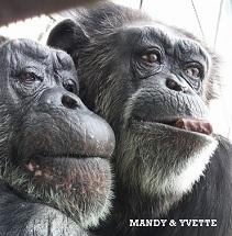 Mandy & Yvette 211