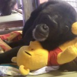 Pamela with pooh toy June 2014 copy