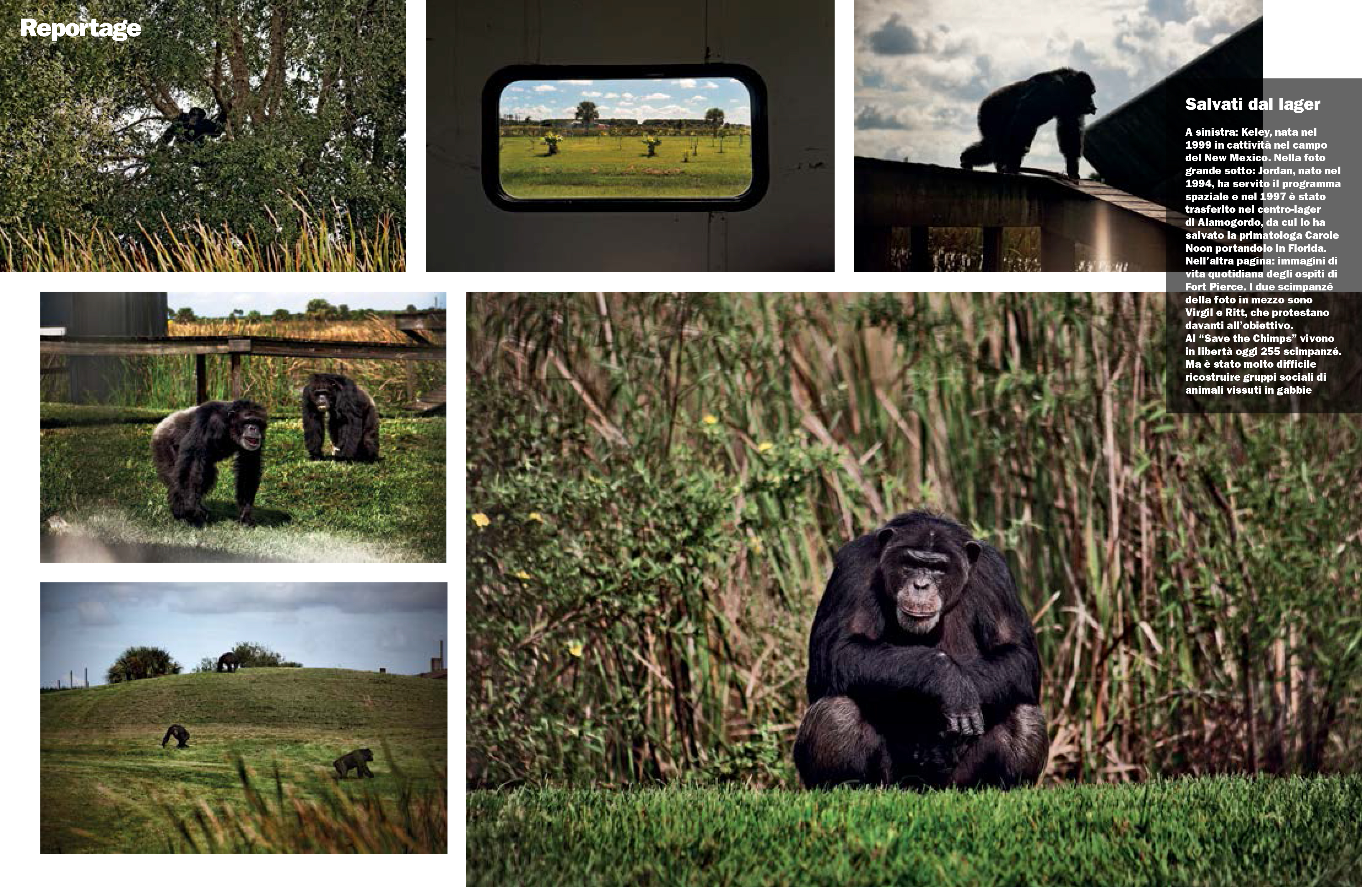 SAVE THE CHIMPS featured in L'ESPRESSO MAGAZINE-2