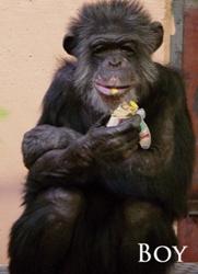 chimpmas_12
