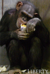 chimpmas_3