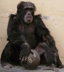 chimpmas_8