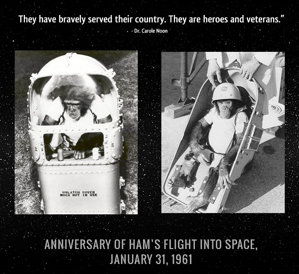 chimps in space2 graphic