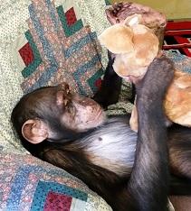 Lisa Marie with Stuffed Animal