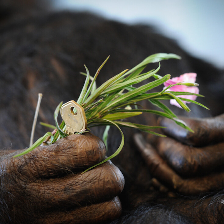 honoring our chimps
